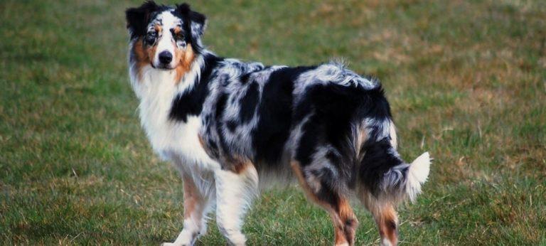 Posséder un chien est-il bon pour la santé ?