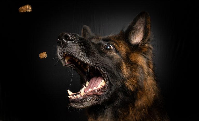 Keadog votre boutique en ligne spécialisée dans les produits pour chien !