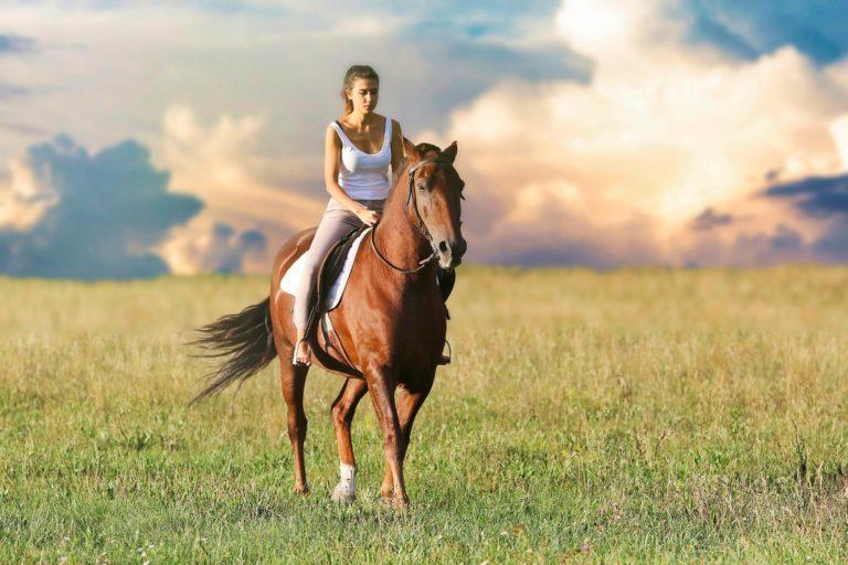 L'équipement pour le cheval et le cavalier