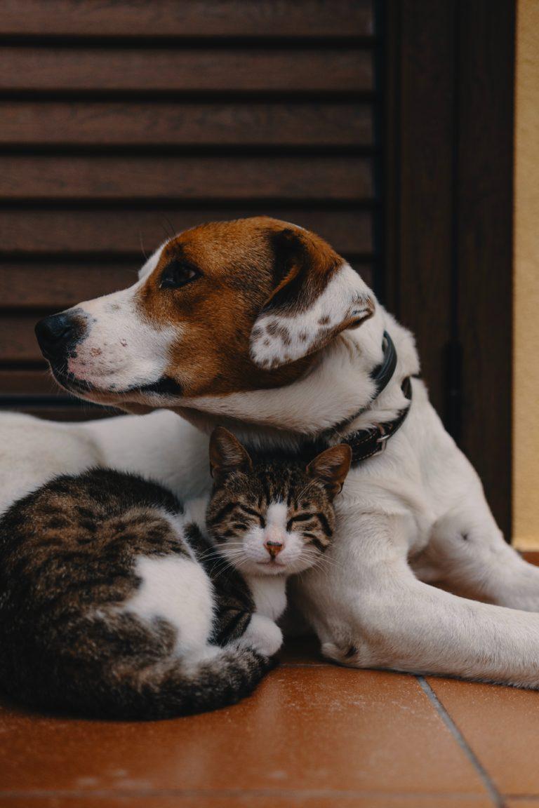 Pourquoi donner de l'huile de poisson à votre chien ou chat ?