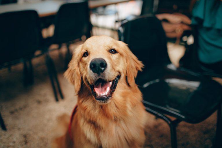 Cohabitation chien et chat : Les bases pour une cohabitation réussie !